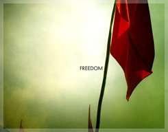 Freedom by Rysh